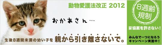 8syu_b_main_L3.jpg